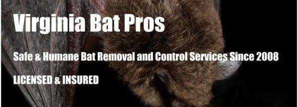 Virginia Bat Removal and Control 804-729-9097