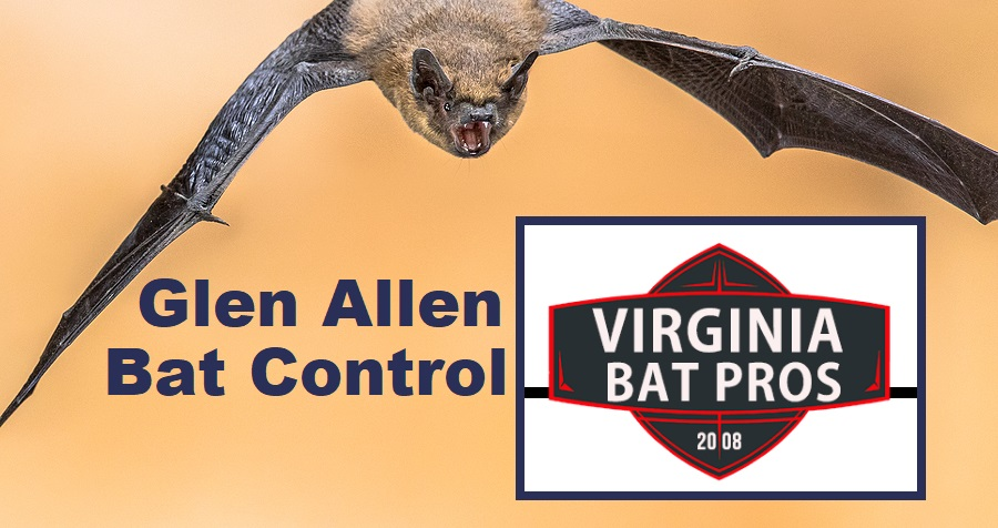 Glen Allen Bat Removal and Control